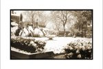 home-spring-1915-119-taylor-carter-house-front-yard